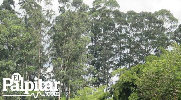 BosquesOriente_2015_el_Palpitar