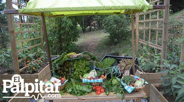 aulaambientalsoldeoriente_elpalpitar11