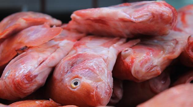 pescado_elpalpitar1