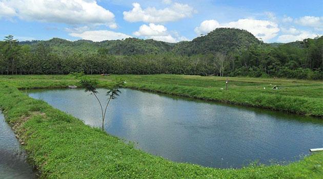 estanque_criadero_paludismo