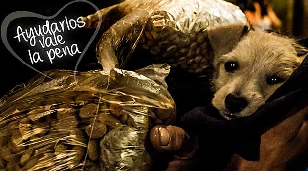 donaton_animales