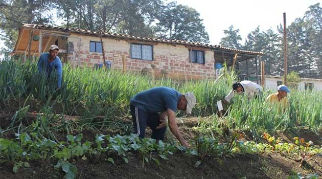 practicas_agricolas_jardin_circunvalar