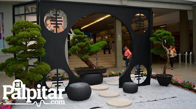exposicion-de-bonsai-galeria5