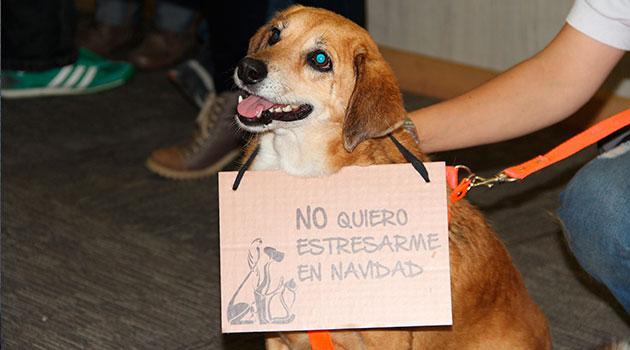 huellaton_perro_campaña