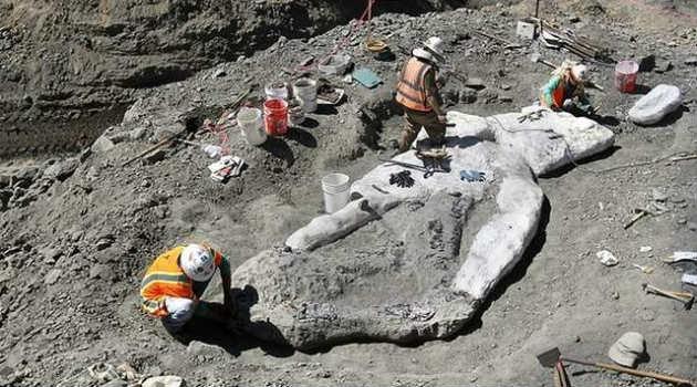 ballena_fosil_arqueología