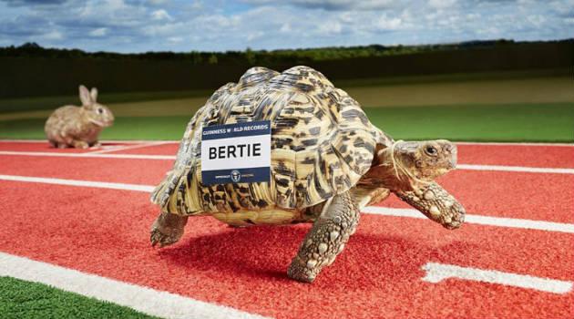 bertie_guiness