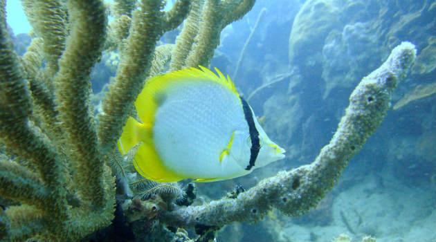 coral_pez_sea_flower_udea2