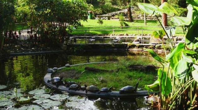 laguna_jardin_botanico