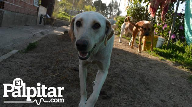 lupe_perro_mascota2