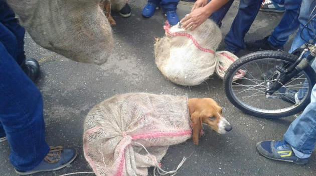 perros_costales_maltrato