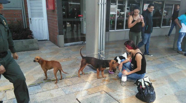 perros_costales_maltrato2