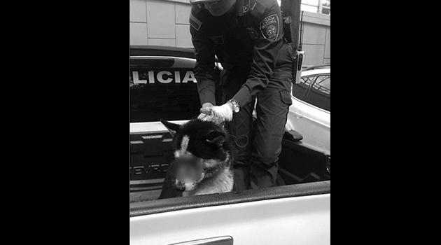 Perro-maltratado-envigado2