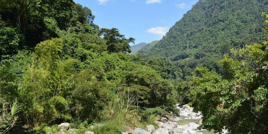 Bosques_Guadalupe_El_Palpitar