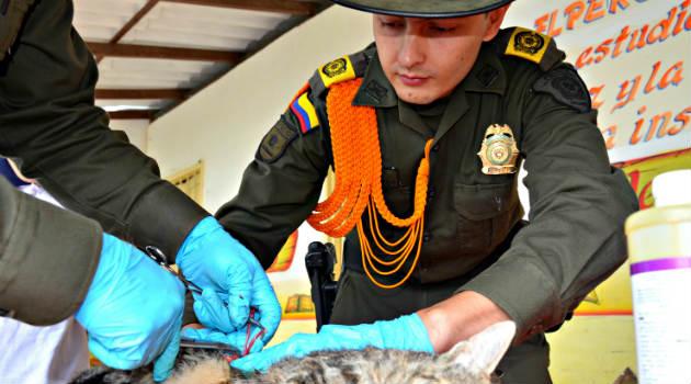 policia_mascotas_esterilizacion