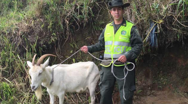 chiva_animal_maltrato_policia2