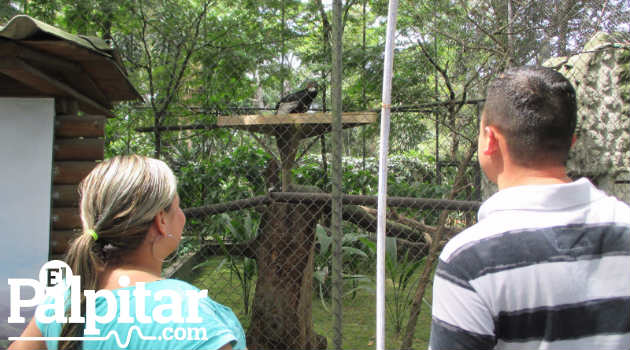 condor_andino_chileno_zoológico_aves2