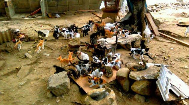gatos_callejero_animales