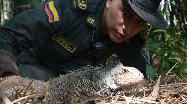 iguana_policia