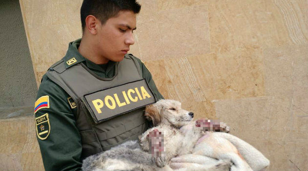 maltrato_animal_perro_bogotá3