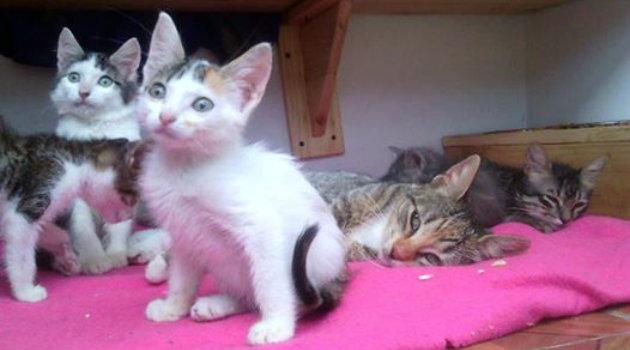 gatos_adpoción_animales