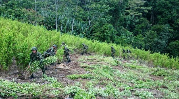 soldados_erradicación_cultivos_marihuana