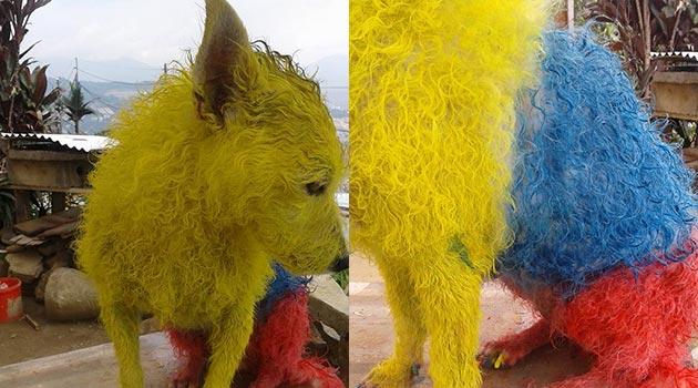 perro_pintura_colombia