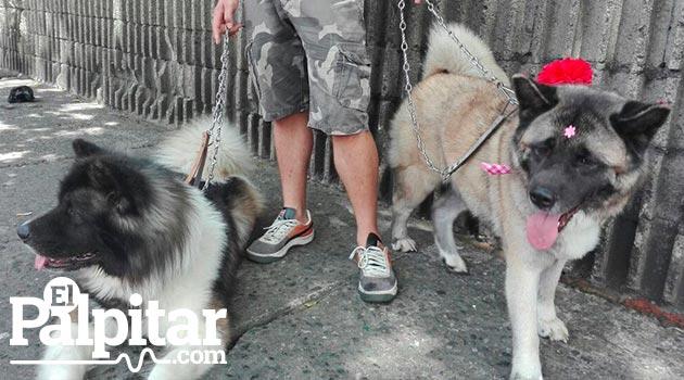 perros_marcha_canina10_mikaela_monstruo