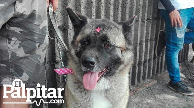 perros_marcha_canina2_mikaela