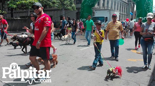 perros_marcha_canina4_caminata
