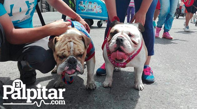 perros_marcha_canina7_bulldogs