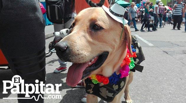 perros_marcha_canina8_odin