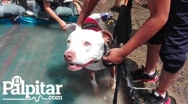 perros_marcha_canina9_janco