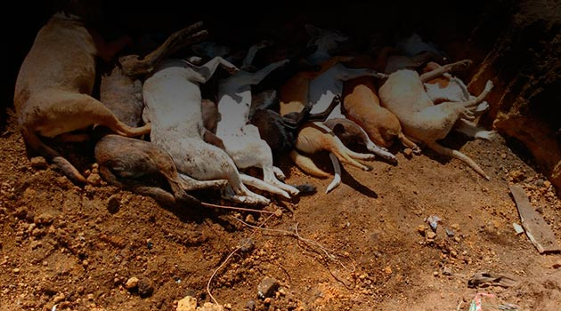 perros_muertos_san_felix