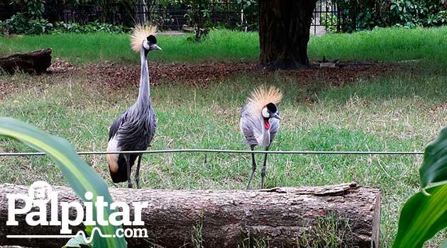 Zoológico_SantaFe_El_Palpitar-1