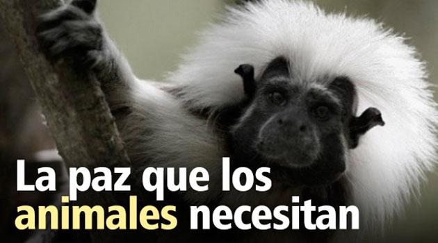Animales_Paz_El_Palpitar
