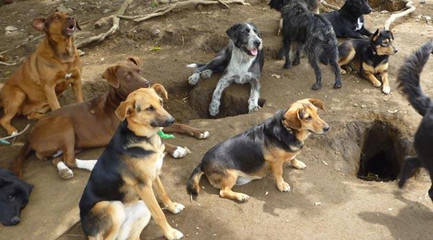 perro_caldas_desalojo2