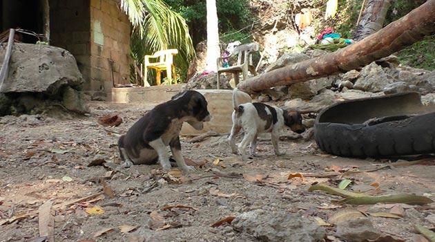 isla_fuerte_perro2