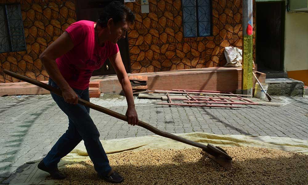 Caficultores_Antioquia_Productividad_El_Palpitar