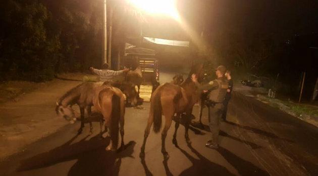 caballos_el_escobero
