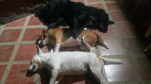 perros_envenenados