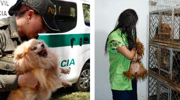 perros_raza_policía3