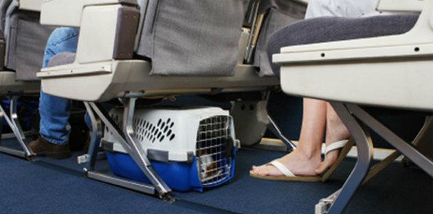 Mascotas-avión