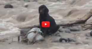Viral: Arriesgaron sus vidas para salvar a un perro en medio de la tragedia del Perú