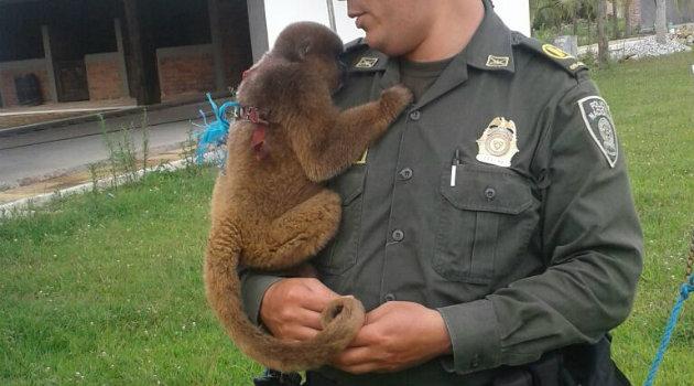 Entre las especies se destaca un mono lanudo. Foto: CORTESÍA.