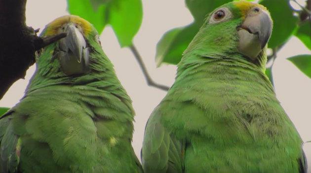 En el video se puede observar loros. Foto: CORTESÍA.