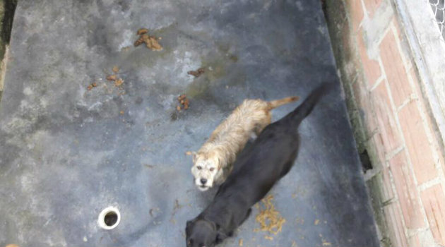 Así estarían viviendo estos animales. Foto: CORTESÍA.