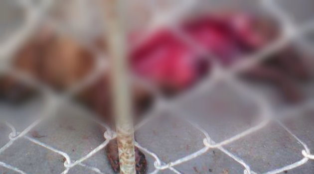 Uno de los perros fue devorado por dentro. Foto: CORTESÍA.