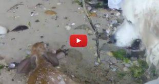 Video: Storm es el héroe de Internet por rescatar a un venado