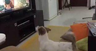 """Video: La sorpresiva reacción del perro cuando escucha """"Despacito"""""""