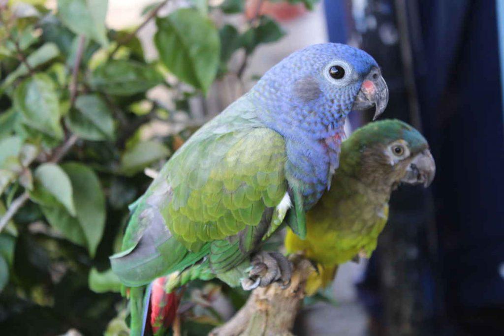 proteger la fauna y flora